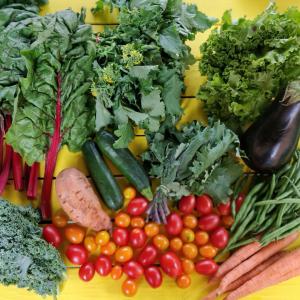 Tomatoes, cucumbers, potatoes, carrots, kale, and eggplant.